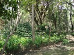 Parque de Xicotencatl