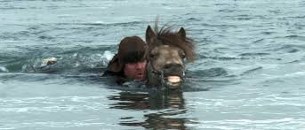 Of horses